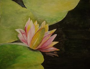A Water Lilly