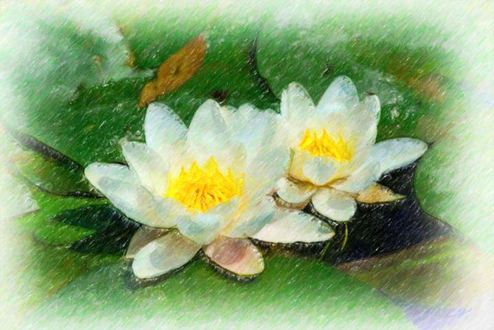 White Lotus in the pond - Lanjee