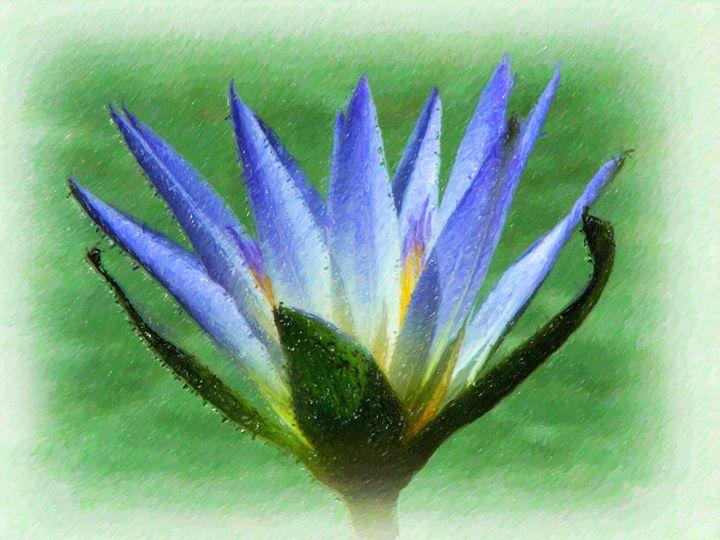 Lotus - Lanjee