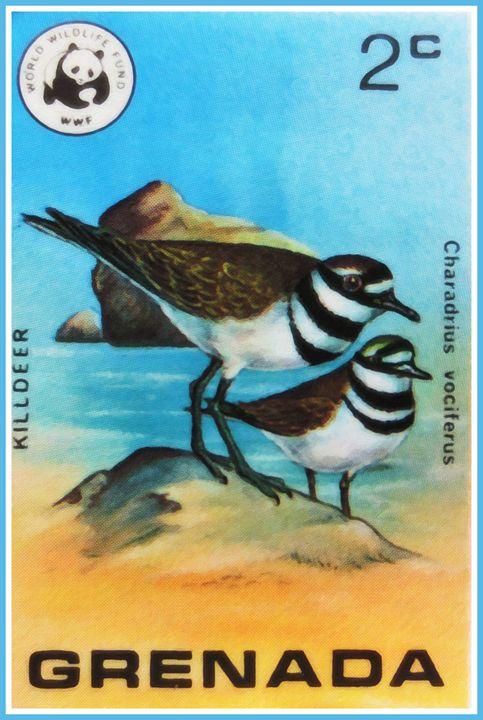Killdeer Bird - Lanjee