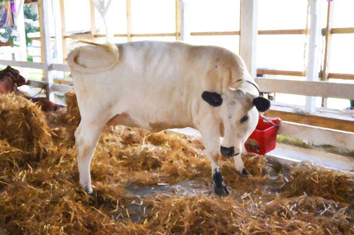 Cute Cow - Lanjee