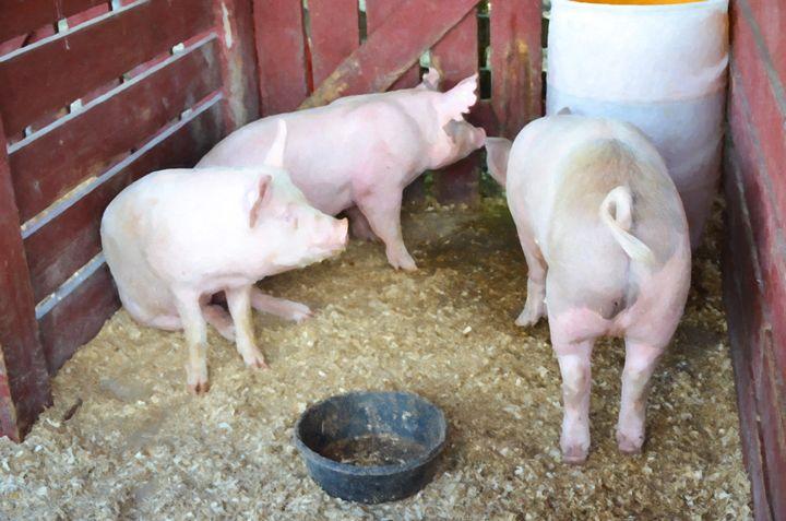 Pig - Lanjee