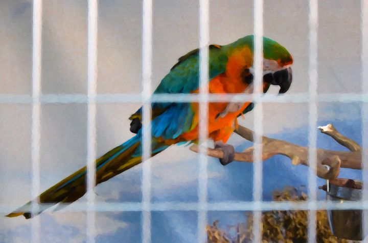 Parrot in a cage - Lanjee
