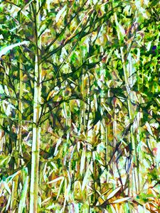 Picture of green bamboo forest