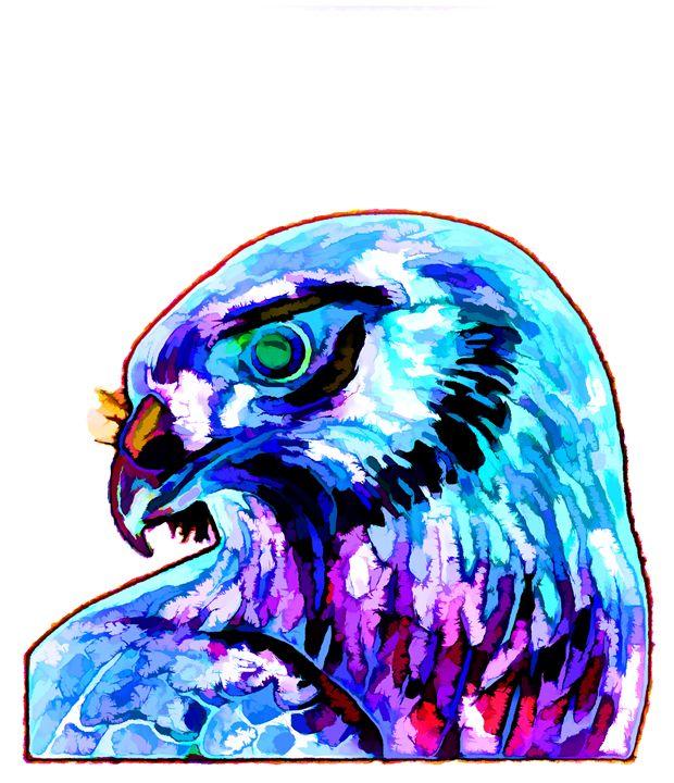 Northern Harrier - Lanjee