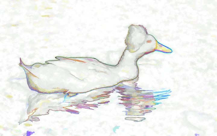 White Crested Duck - Lanjee
