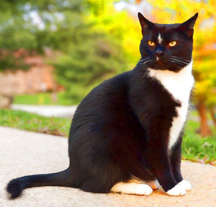 Tuxedo Cat - Lanjee