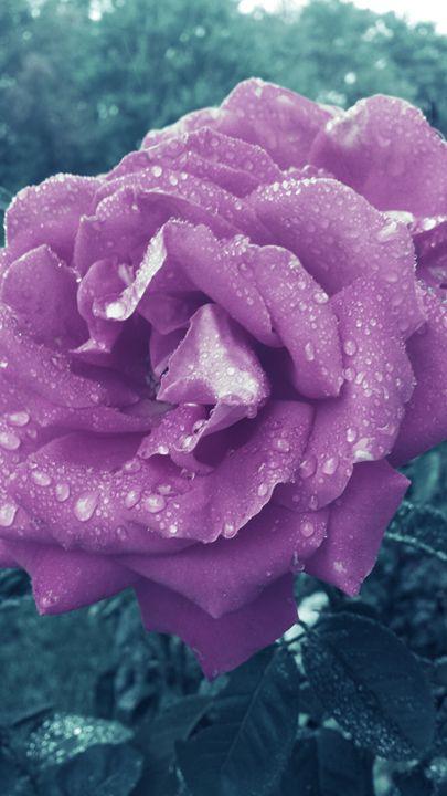 Rose - JLS Arts