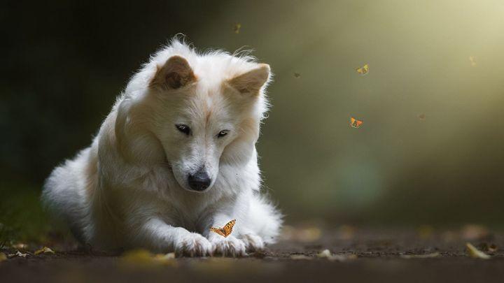 dog with butterfly - Ariana2u