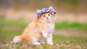 Cute cat kitten