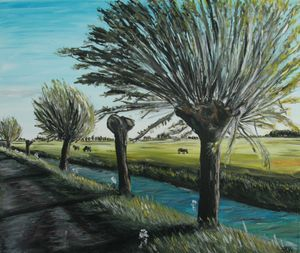 Pollard willows trees along ditch