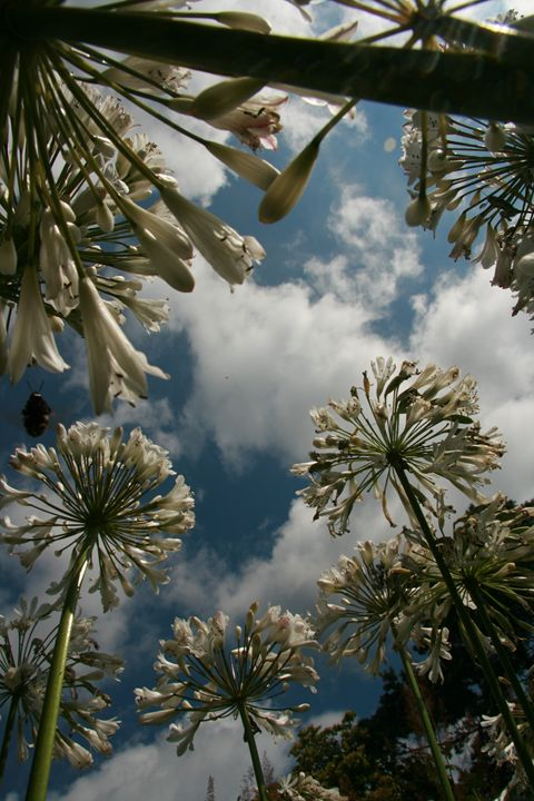 White flowers with half cloudy sky - basart