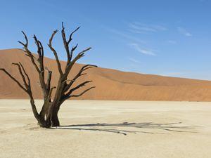 Tree Deadvlei Namibia Desert Africa