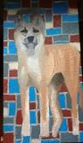Dingo oil painting