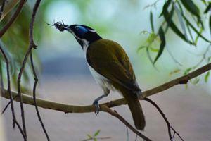Bird Brekkie