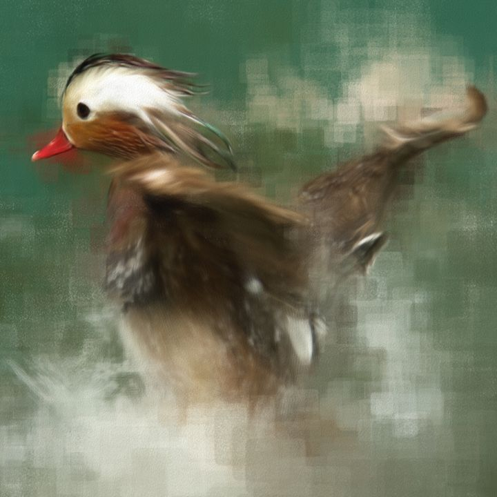 Duck in a Pond - Hisham