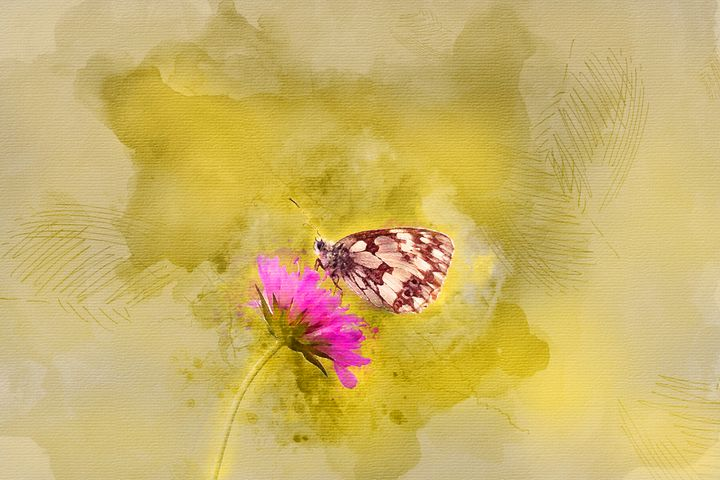 Butterfly #4 - Painted Daisy Prints