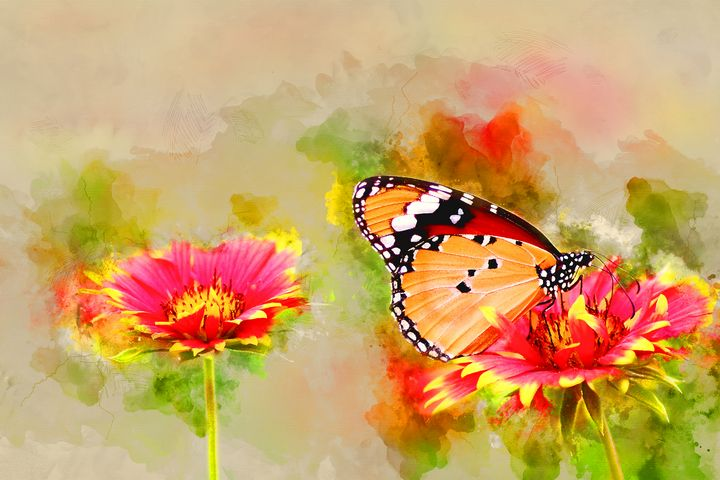 Butterfly #5 - Painted Daisy Prints