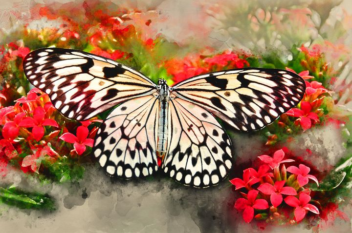 Butterfly #2 - Painted Daisy Prints