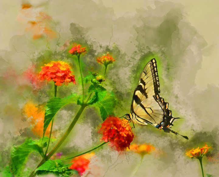 Butterfly #3 - Painted Daisy Prints