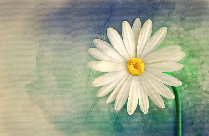 Flower #1 - Painted Daisy Prints