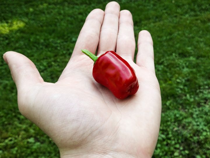 Red Pepper - Ryans Photography