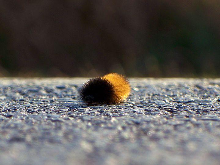 Little Mr. Caterpillar - Bella Blooms Artistry