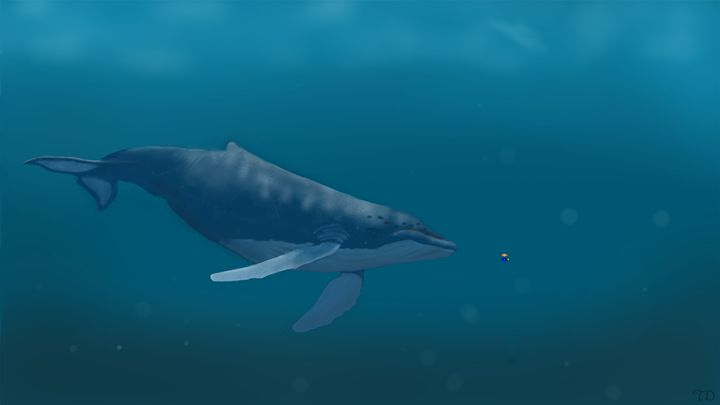 Humpback Whale - Taylor's art
