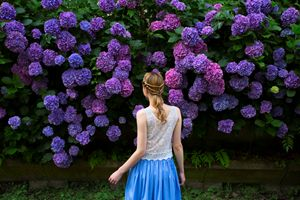 Hydrangea - Natalia Lewandowska Photography