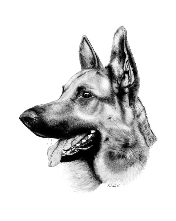 German Shepherd - Incredible Drawings