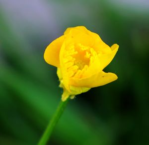 Tiny yellow