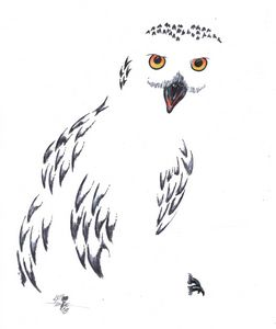 Snowy Owl - Art By Creekmore