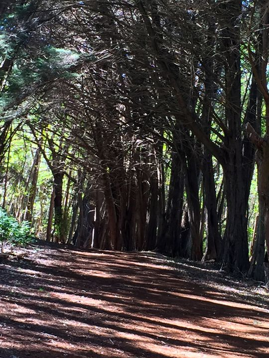 Olinda Forest - Spiritual Reader Hawaii