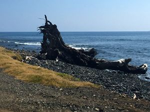 Driftwood Lahaina