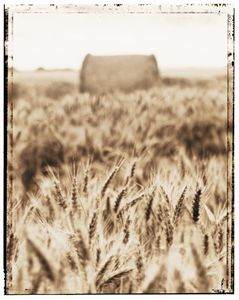 Harvest time - Gem Photography