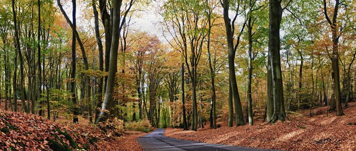 Autumn road - Gem Photography