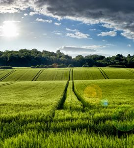 Wheat Field - Gem Photography