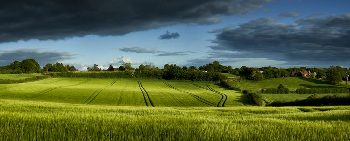 Wheat Field - Gem Photography