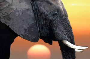 Elephant Head illustration - Gem Photography