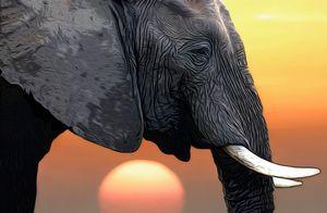 Elephant Head illustration - Gem Photography