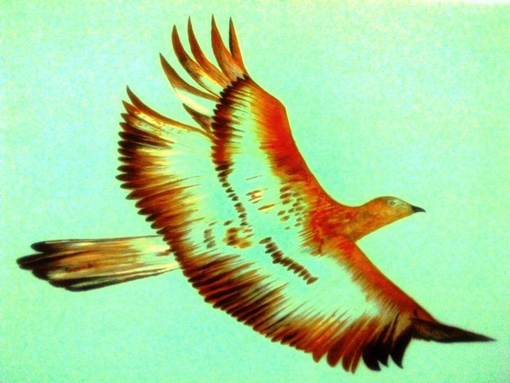 Flying - ehsan's art