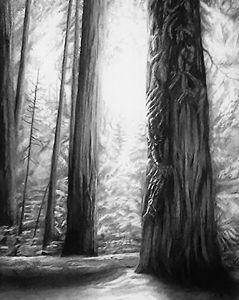 Sacred Sequoia- Ethereal Glow
