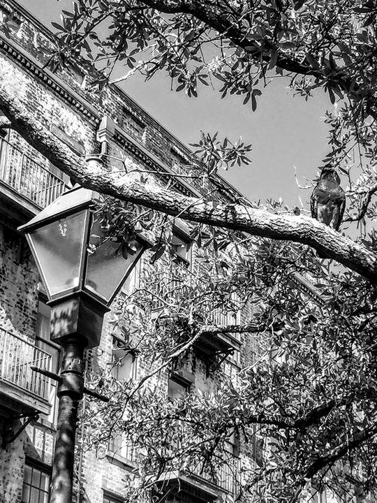Bird in a Tree B&W - Robin Lewis Gallery