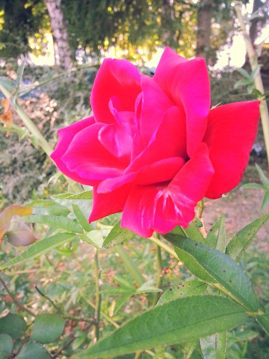 Arrière-cour Rose - Xara Li