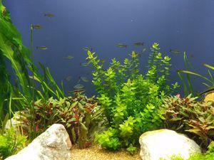 Seaweed Dreams