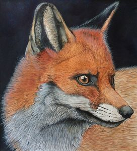 The watchful fox