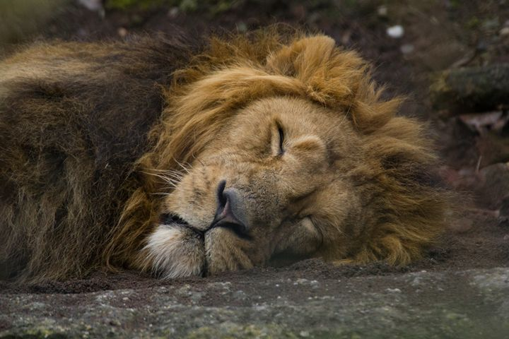 Sleeping King - M.G. Schmid
