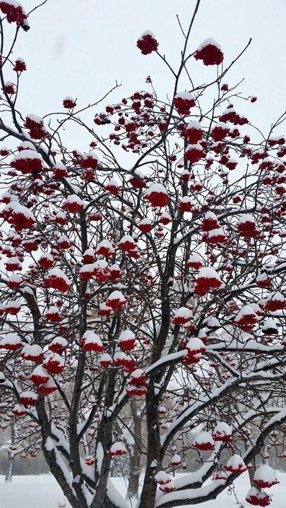 Red Berries - Longpre Studios Gallery