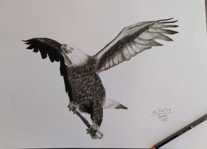 Be bold like an Bald Eagle - airMaXe de Artist