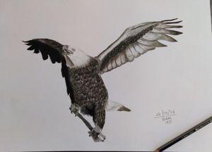 Be bold like an Bald Eagle